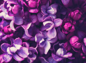 Lincoln Aesthetics purplebg1